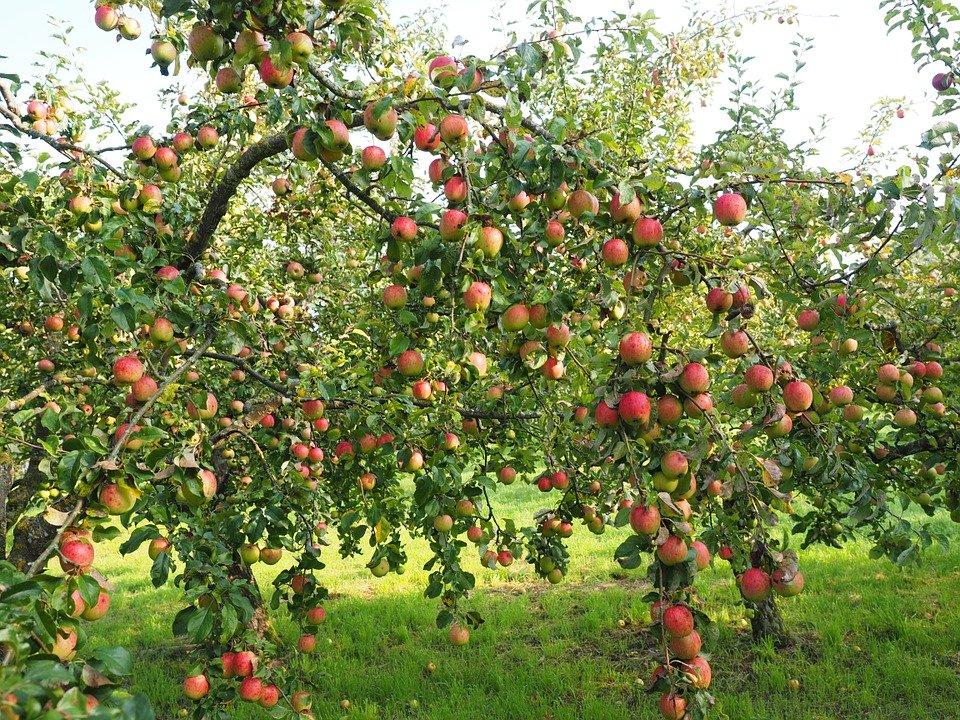 Photo of Met de juiste boomverzorging genieten van een goed gevulde fruitboom