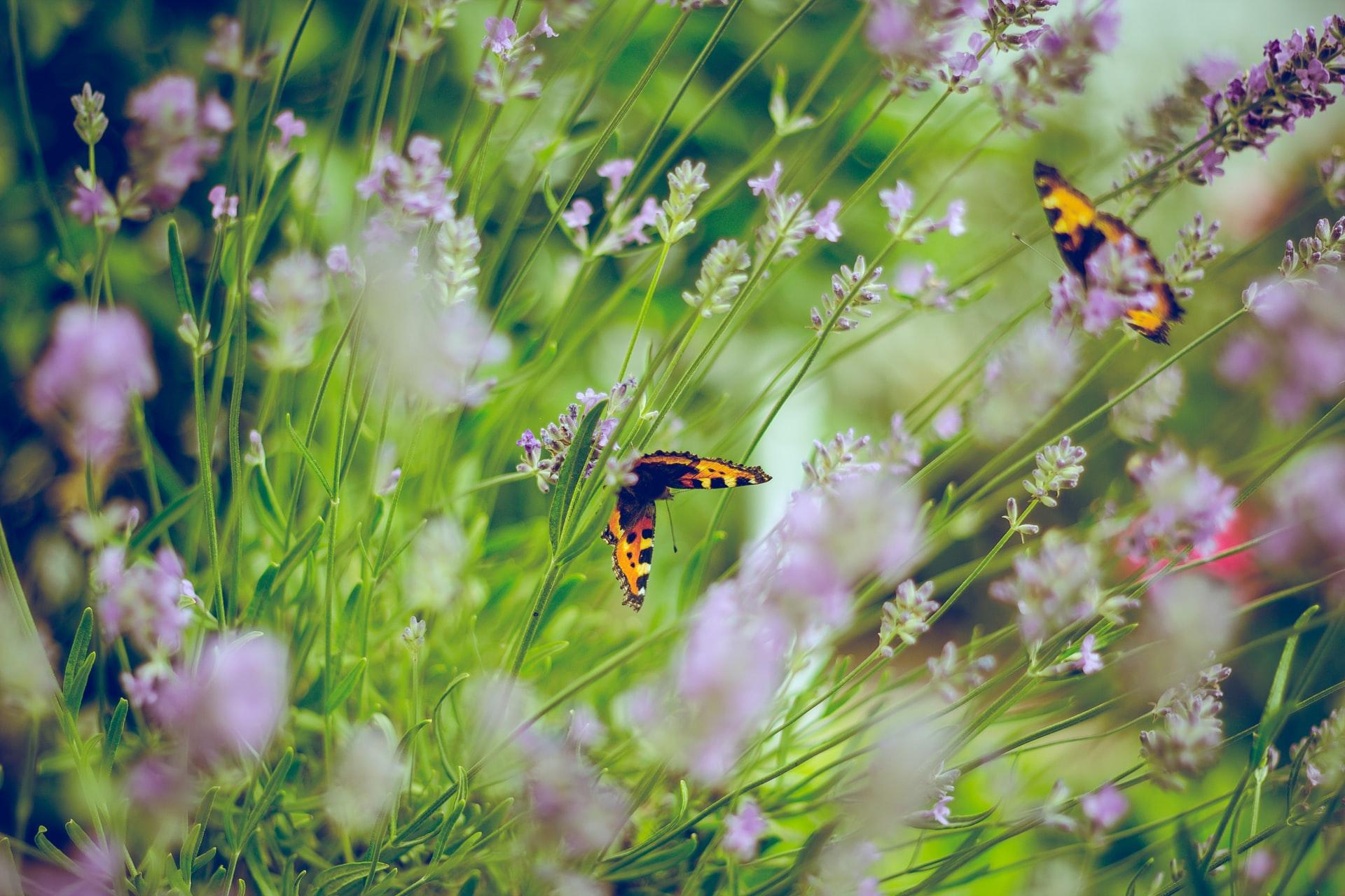 Photo of Waarom kiezen voor een groene tuin?