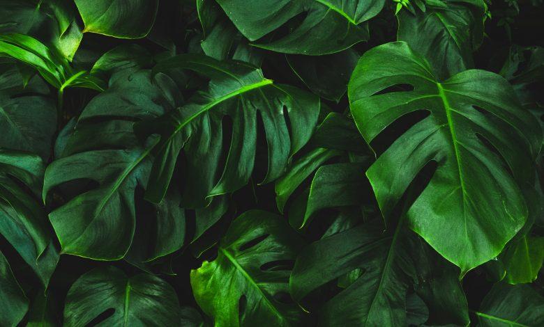 planten in je huis