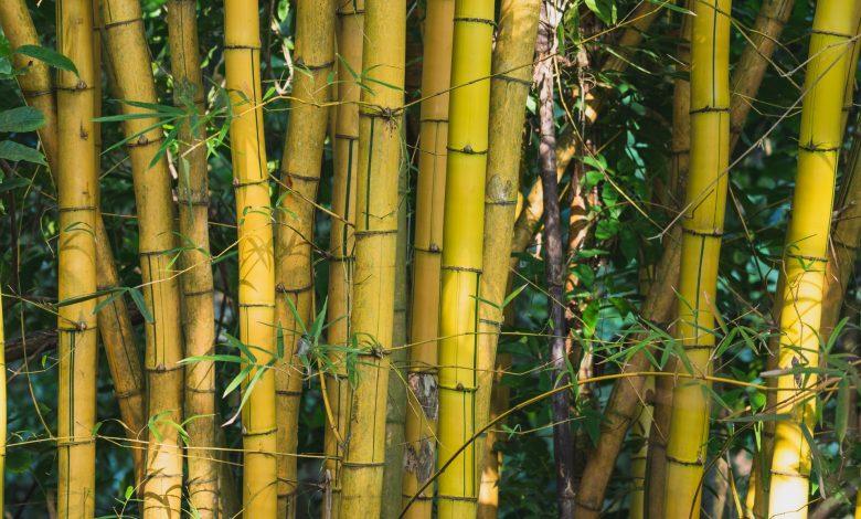 bamboe ondergoed