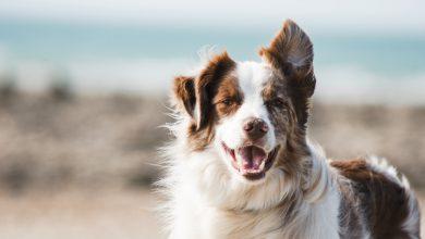 Photo of Vijf tips voor een gezonder huisdier