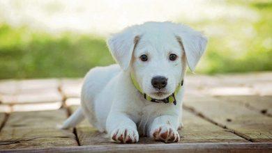 Photo of Je hond ontwormen, zo gaat dat