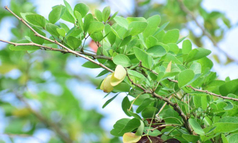 meubels van mangohout