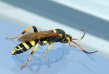 Photo of Insecten bestrijden in huis