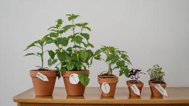 Photo of Maak jouw interieur af met prachtige planten!