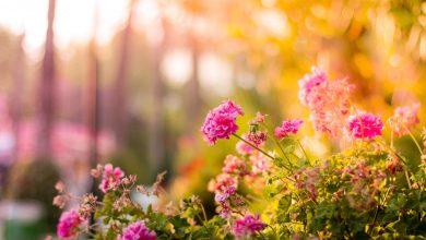 Photo of Milieuvriendelijke opties voor een prachtige tuin
