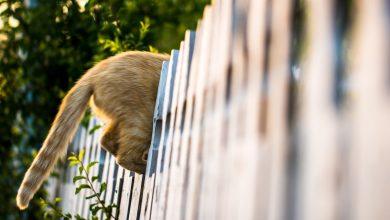 Photo of De manier om privacy te krijgen in je tuin