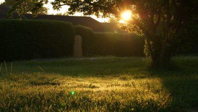 Photo of Drie manieren om je tuin af te sluiten