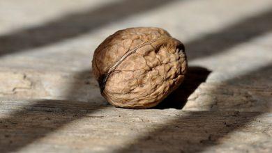 Photo of Alles wat je moet weten over de walnoot