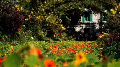 Photo of Zo breng je meer kleur in de tuin