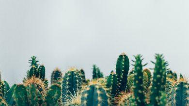 Photo of Welke kamerplanten kunnen tegen de volle zon?