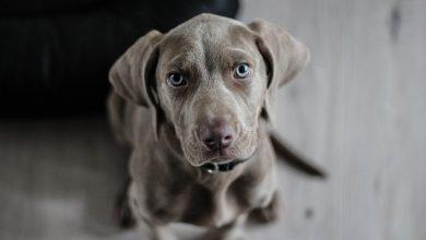 Photo of Zo zorg je ervoor dat een hond goed alleen thuis kan zijn