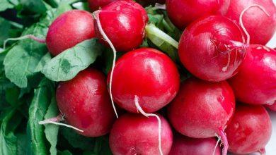 Photo of Prachtige groenten, fruit en planten kweken